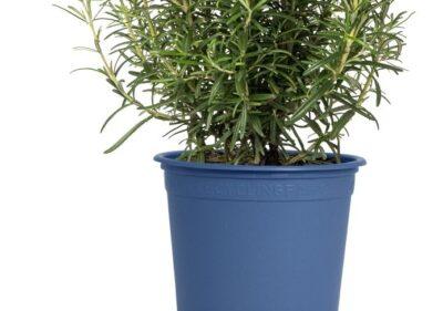 Pöppelmann Pflanzentopf Recyclingfähig